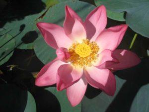 lotos-volgograd